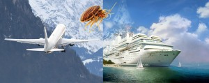 Bed Bugs Travel